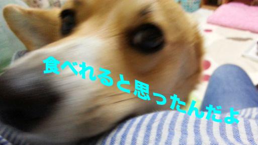 2_20131120094738e6c.jpg