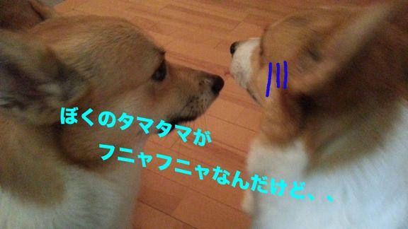 3_201310312330089d9.jpg