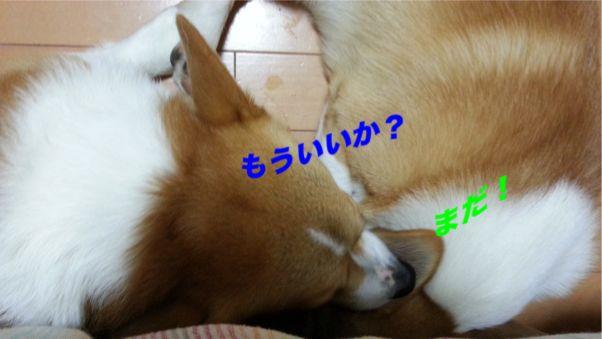 3_20131104104629224.jpg