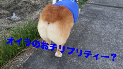 3_20131112144327db5.jpg