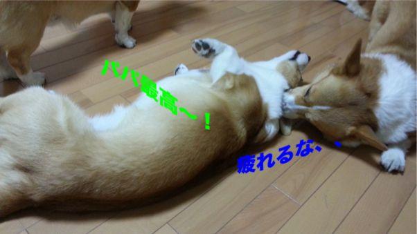 4_20131104104639b2e.jpg