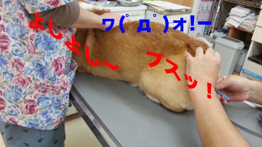 4_20131113164103dc5.jpg