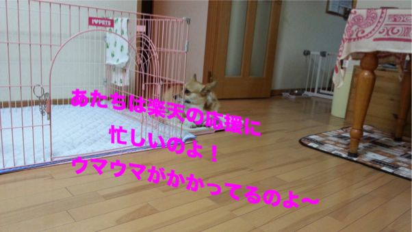5_20131104104632a3a.jpg