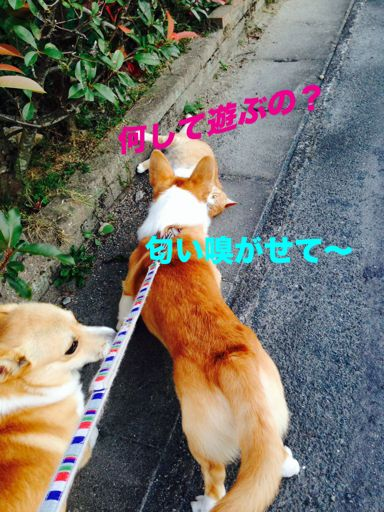 image-6_3.jpg