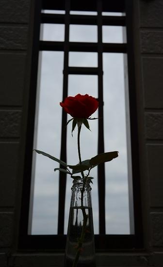 薔薇1輪Kotechai_6677s