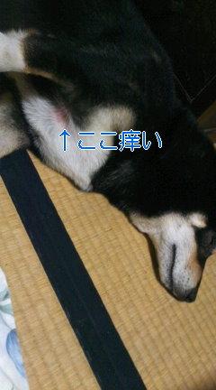 moblog_1cc30598.jpg
