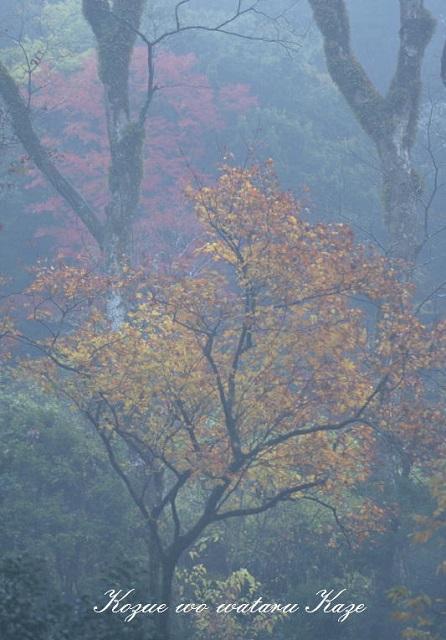 秋の情景13