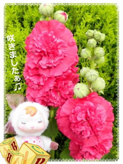 花ブ201369-3