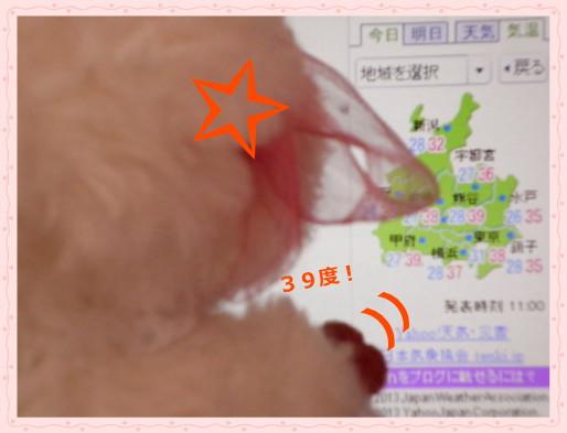 花ブ2013811-2