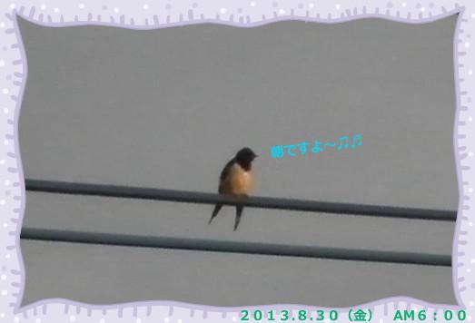 花ブ2013830-2