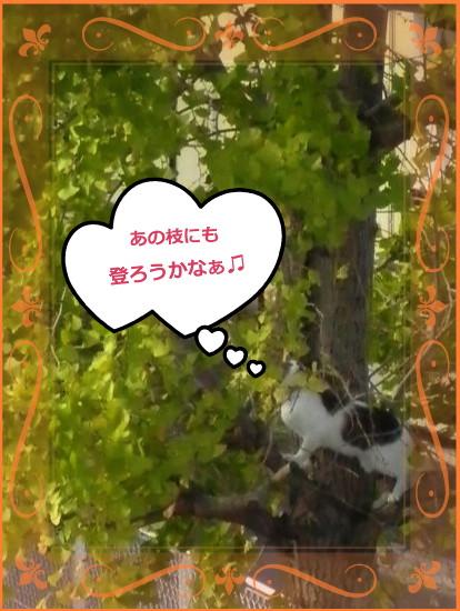 花ブ201415-3