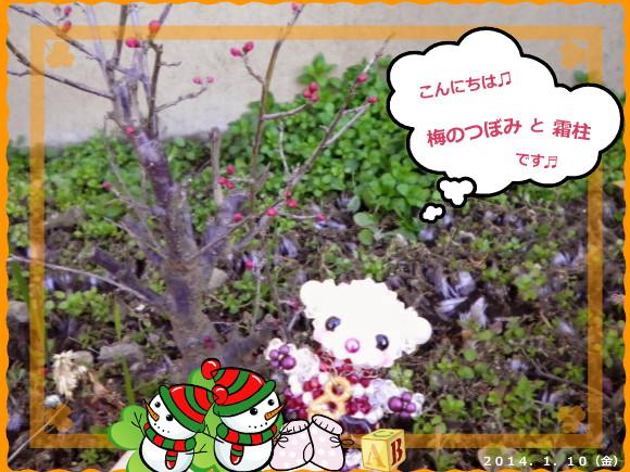 花ブ2014110-1
