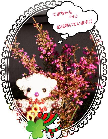 花ブ20141 11-1