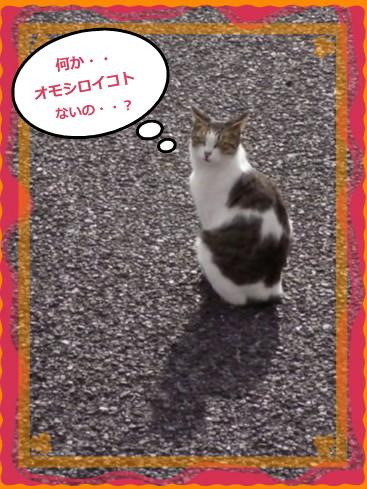 花ブ20141 11-2