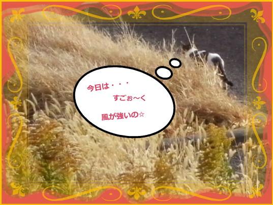 花ブ20141 13ー1