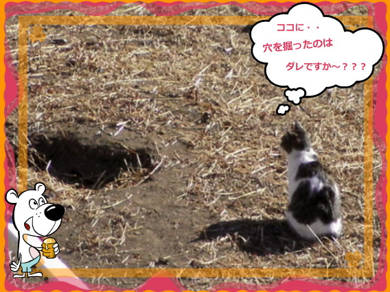 花ブ20141 19-1