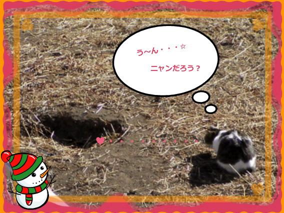花ブ20141 21-1