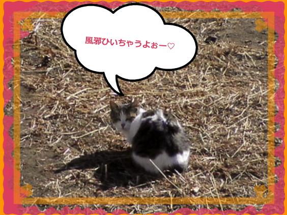花ブ20141 23-2