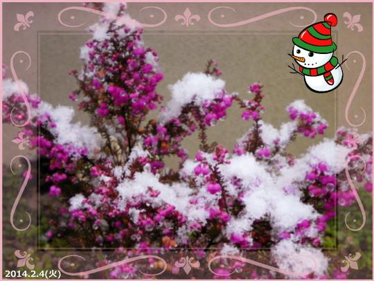 花ブ20140205-4
