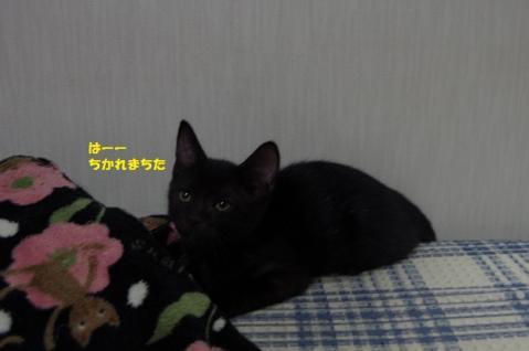 062ぽるとくん20130907②