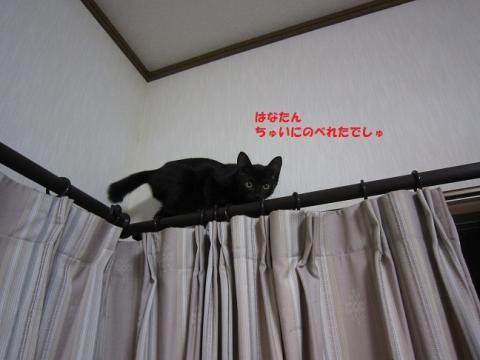 001はなかごちゃん20130921