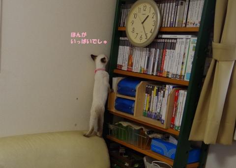 156マリアンちゃん20130923