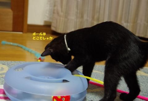 019はなかごちゃん20130927