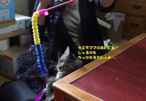 009ののじ20131019