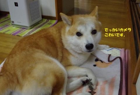008うめちゃん20131124