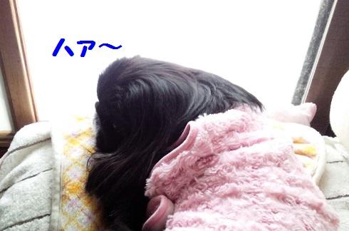20131114mu2.jpg