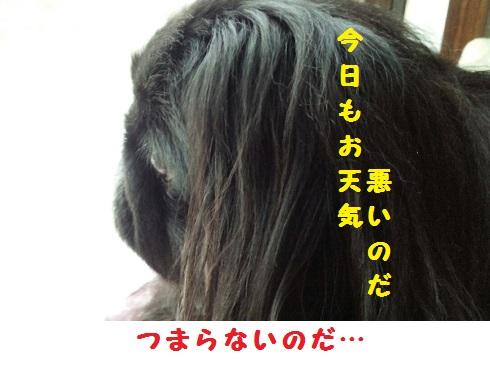 20131114mu3.jpg