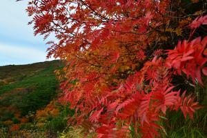 御嶽の紅葉3