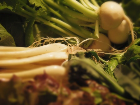 稲葉農園の有機野菜