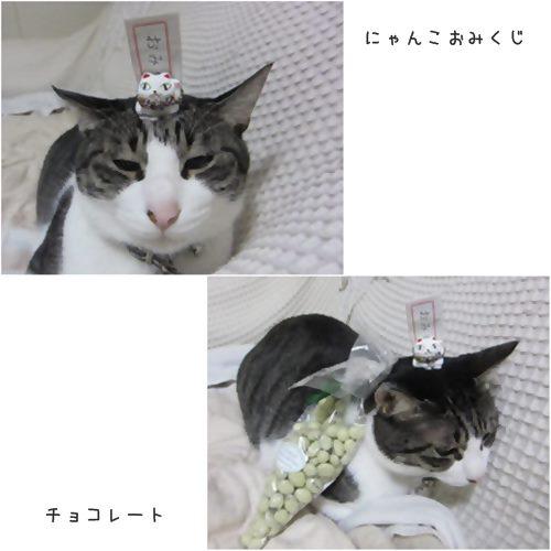 catsおみくじ