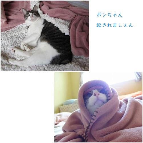 catsあさ