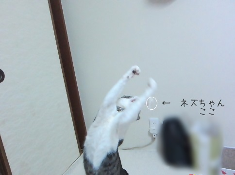 IMG_6337 2014 1 (960)