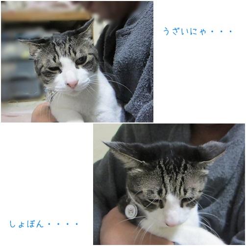 catsうざい