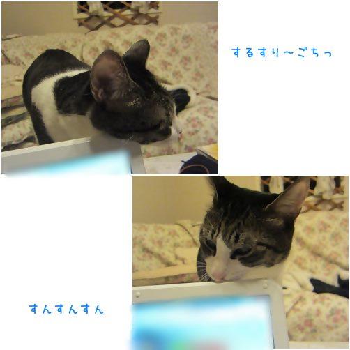 catsすんすん