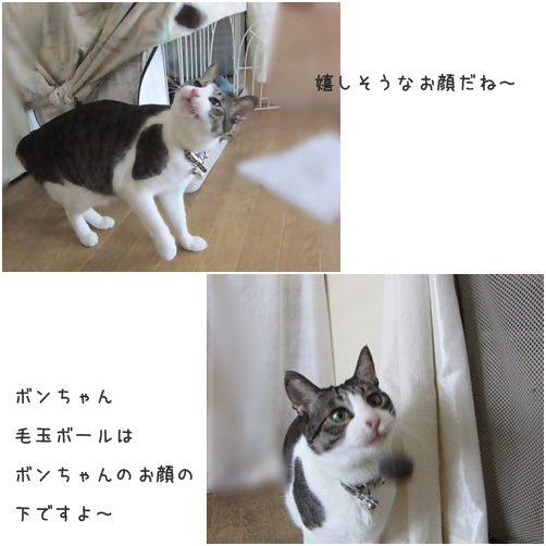 catsお顔