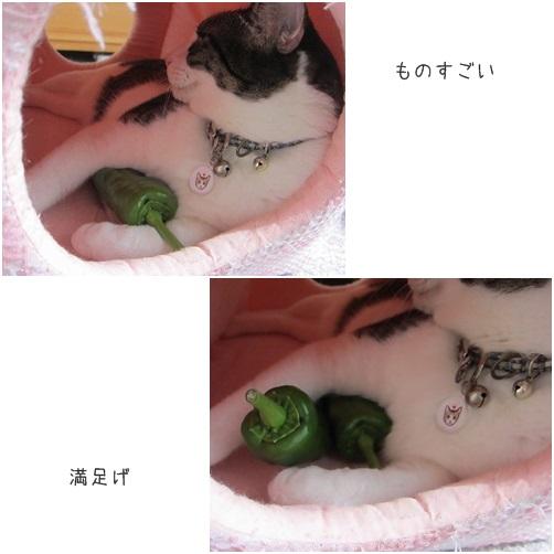 cats満足