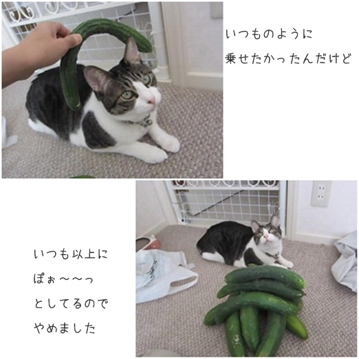 catsぽお