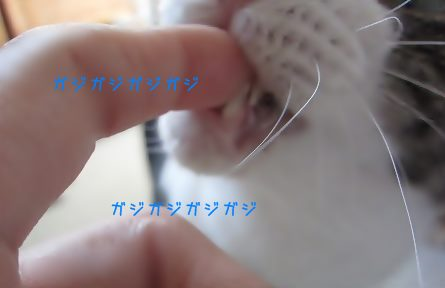 IMG_7105 2014 10 (1790)