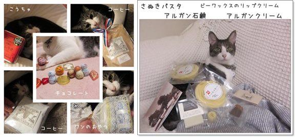 cats-horz_20131108194746505.jpg