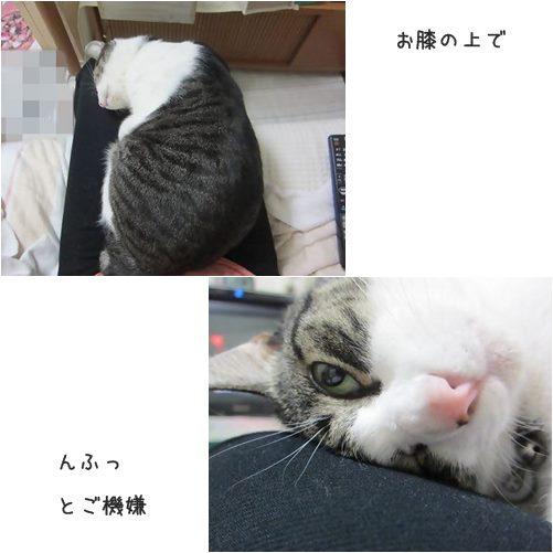 cats1_20131113234651833.jpg