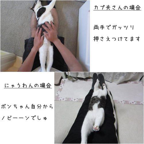 cats1_20131116192306d98.jpg
