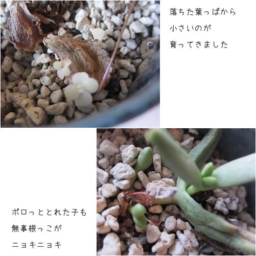 cats1_20131126140857c05.jpg