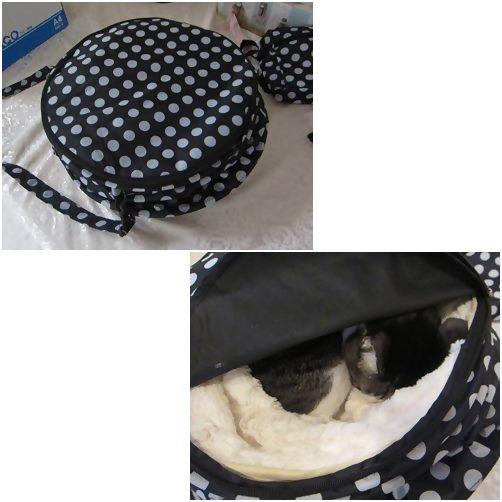 cats1_20141021205009e03.jpg