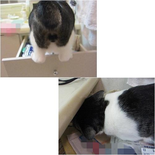 cats2_20131103004123721.jpg