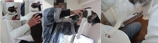 cats5_20141013164054d92.jpg