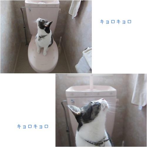cats_20131101131727360.jpg